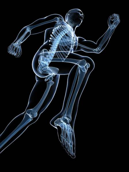 Normal Wall Art - Photograph - Running Skeleton by Sciepro/science Photo Library