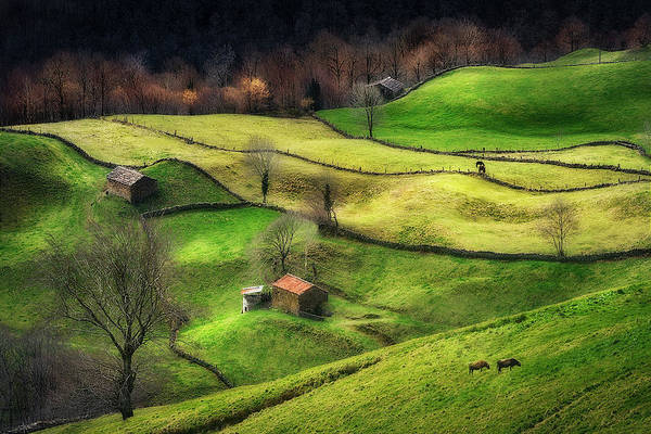 Farmhouse Photograph - Rural Life by Oskar Baglietto