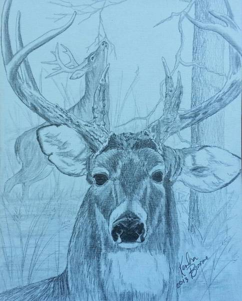 Whitetail Drawing - Rut Time by Kendra DeBerry