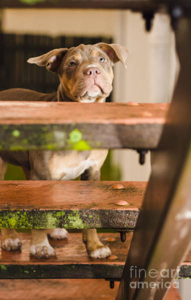 Homeless Photograph - Sad Lost Puppy Dog Looking Up Steps Of A House by Jorgo Photography - Wall Art Gallery