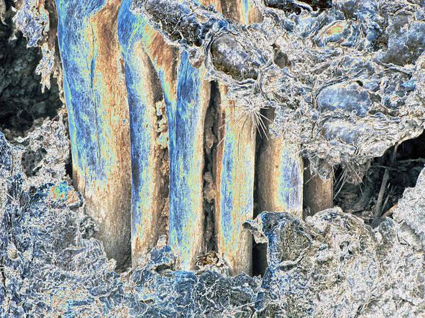 Photograph - Saguaro Skeleton by Tam Ryan