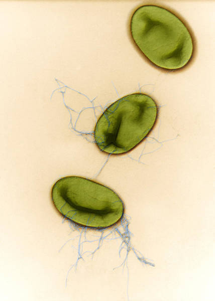 Wall Art - Photograph - Salmonella, Tem by Eye of Science