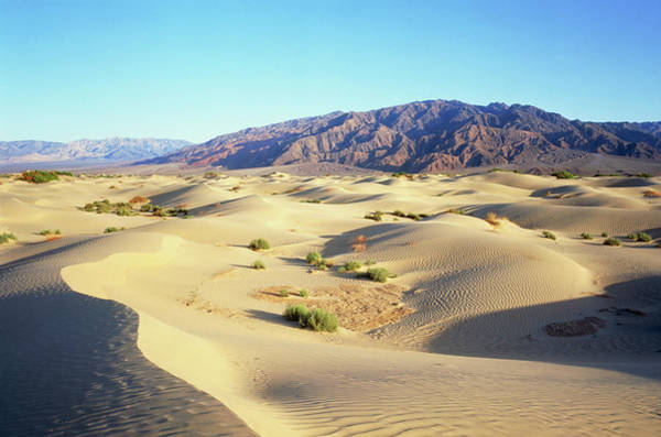 Death Valley Photograph - Sand Dunes In Death Valley by Simon Fraser/science Photo Library