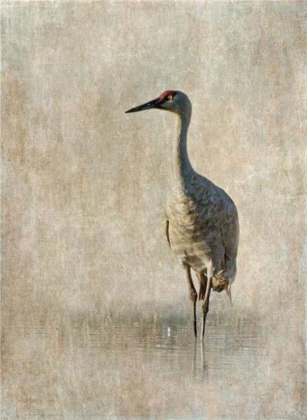 Sandhills Photograph - Sandhill Crane by Angie Vogel
