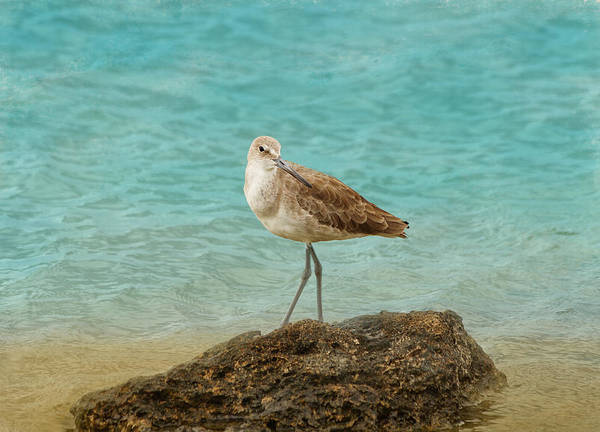 Photograph - Sandpiper by Kim Hojnacki