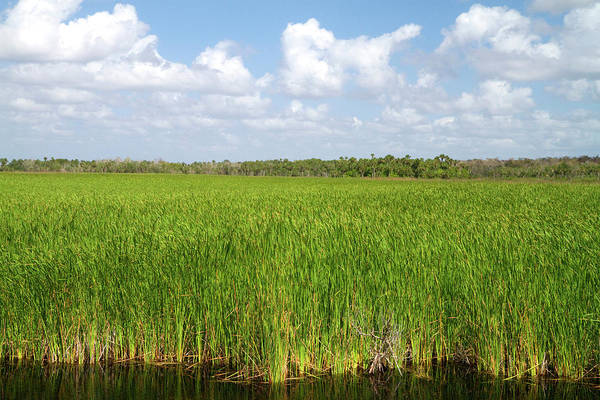 Southeastern Photograph - Sawgrass In The Florida Everglades by David R. Frazier