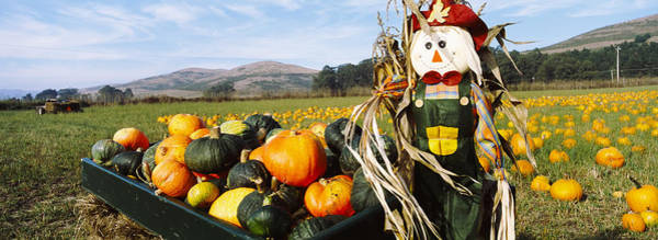Vegetable Patch Wall Art - Photograph - Scarecrow In Pumpkin Patch, Half Moon by Panoramic Images