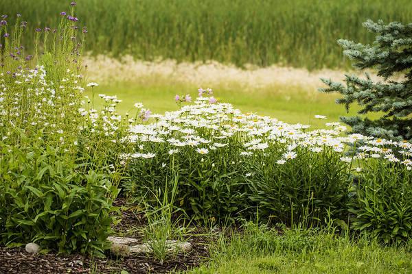 Photograph - School Garden by  Onyonet  Photo Studios