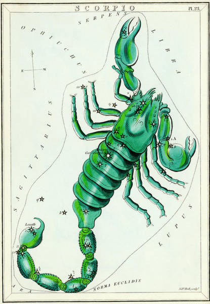 Mythological Photograph - Scorpio Constellation by Royal Astronomical Society/science Photo Library