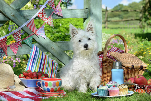 Wall Art - Painting - Scottie Dog Picnic Dp1309 by MGL Meiklejohn Graphics Licensing