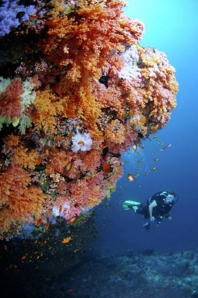 Wall Art - Photograph - Scuba Diving by Scubazoo/science Photo Library
