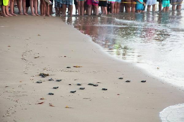 Sea Turtles Conservation Art Print