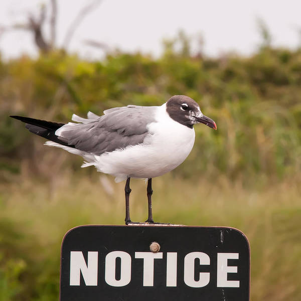 Photograph - Seagull Standing On A Notice Sign by Alex Grichenko