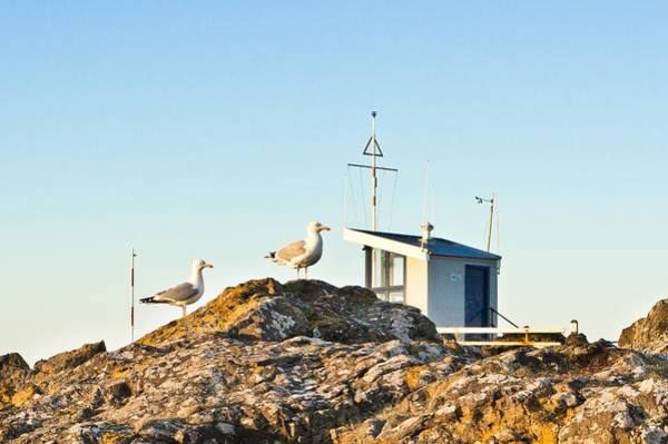 Wall Art - Photograph - Seagulls by Tom Gowanlock