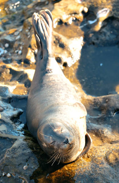 Photograph - Seal by Songquan Deng