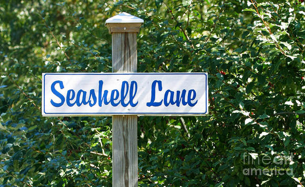 Photograph - Seashell Lane by Michelle Constantine