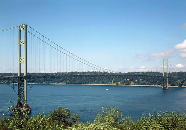 Bracing Photograph - Second Tacoma Narrows Bridge by Library Of Congress/science Photo Library