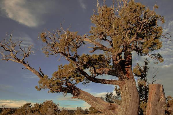 Photograph - Sedona Landscape by Steven Lapkin