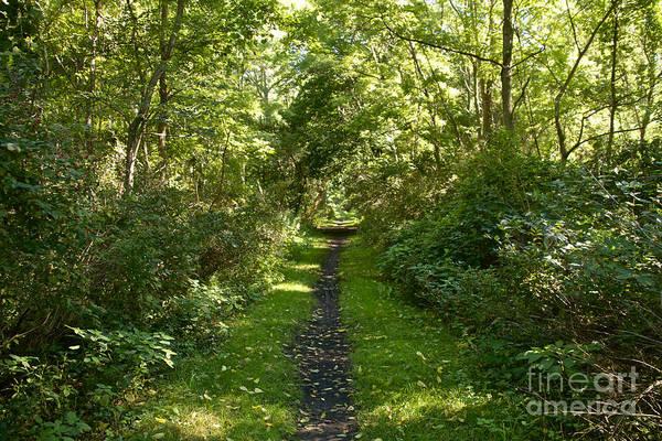 Photograph - Seneca Keuka Trail by William Norton