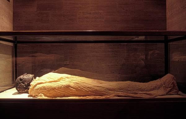 Wall Art - Photograph - Seti I Mummy by Patrick Landmann/science Photo Library