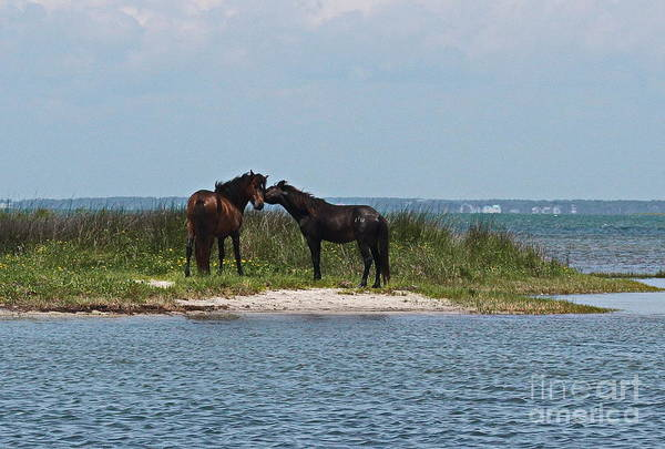 Harker Photograph - Shackleford Ponies 4 by Cathy Lindsey