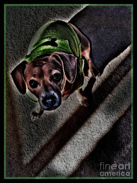 Dog Biscuit Photograph - Shaded by Angela J Wright