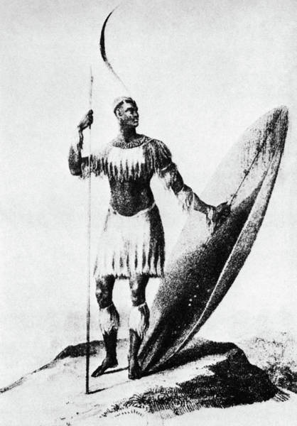 Wall Art - Drawing - Shaka Zulu (c1787-1828) by Granger