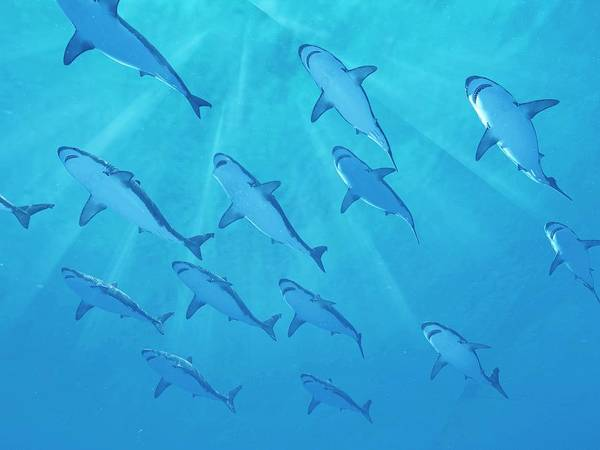 Wall Art - Photograph - Sharks Swimming Underwater by Sciepro/science Photo Library