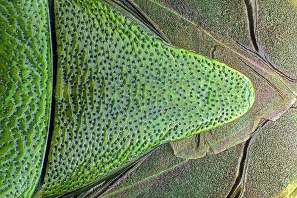 Wing Back Photograph - Shield Bug by Frank Fox