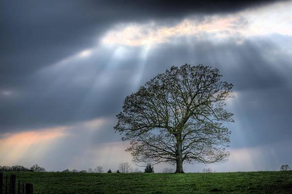 Photograph - Shining Down by JC Findley