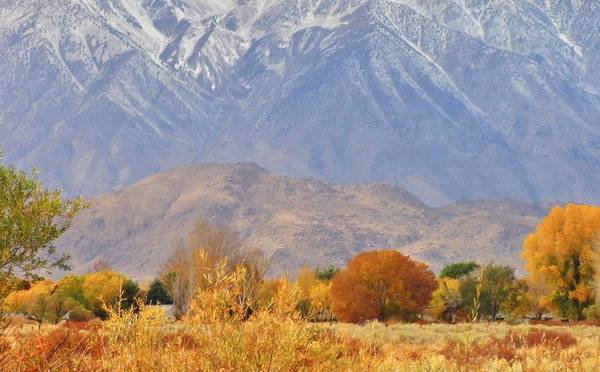 Bishop Hill Photograph - Sierra Fall by Marilyn Diaz