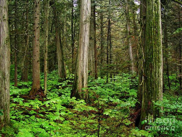 Photograph - Silent Forest by Rachel Duchesne