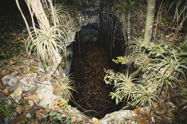 Wall Art - Photograph - Sinkhole In The Bahamas by Carleton Ray