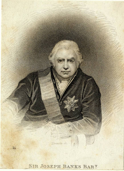 Endeavour Photograph - Sir Joseph Banks by Natural History Museum, London/science Photo Library