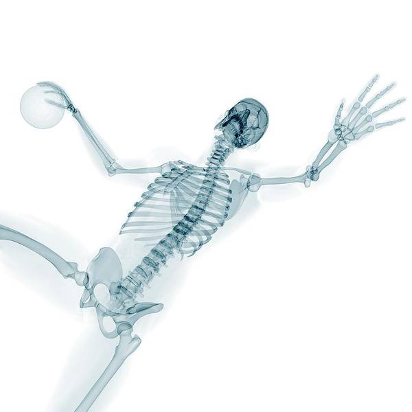 Wall Art - Photograph - Skeleton Playing Handball by Sciepro/science Photo Library