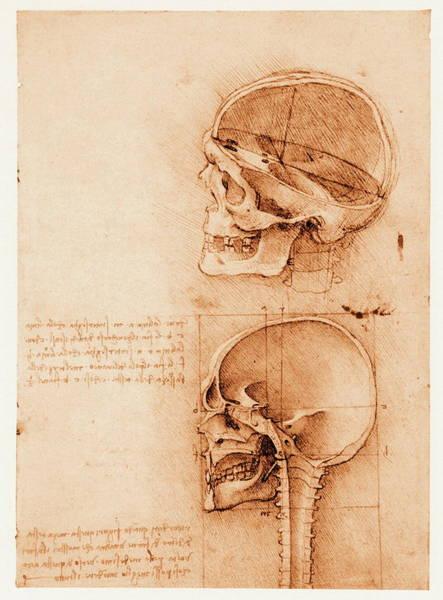Photograph - Skull Anatomy by Mehau Kulyk