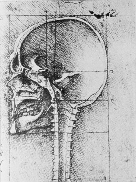 Wall Art - Photograph - Skull Anatomy by Science Photo Library