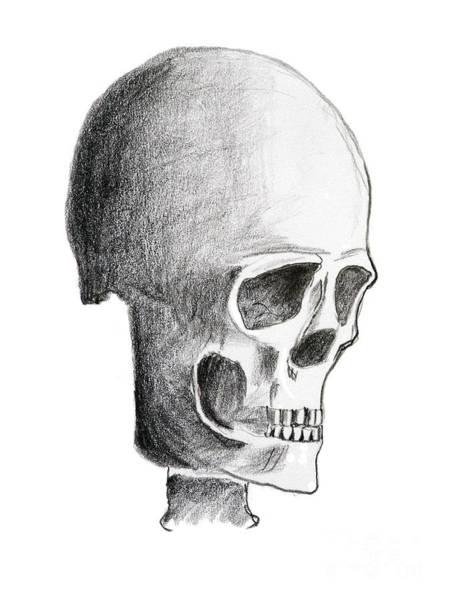Wall Art - Drawing - Skull by Michal Boubin