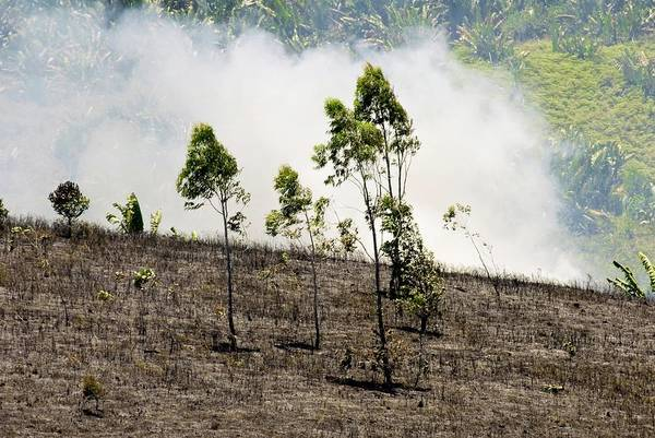 Madagascar Photograph - Slash And Burn Agriculture by Philippe Psaila/science Photo Library