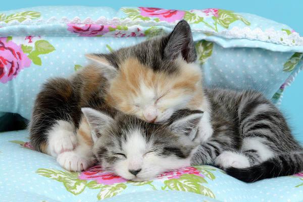 Asleep Painting - Sleeping Floral Kittens by MGL Meiklejohn Graphics Licensing