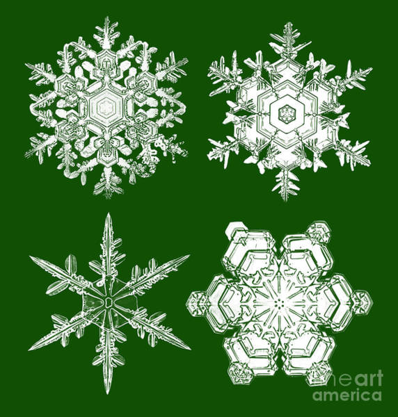 Photograph - Snowflakes by Robin Treadwell