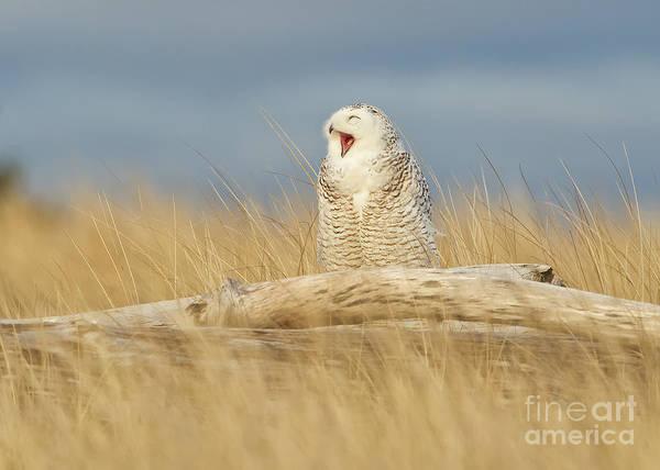 Joshua Clark Photograph - Snowy Owl by Joshua Clark