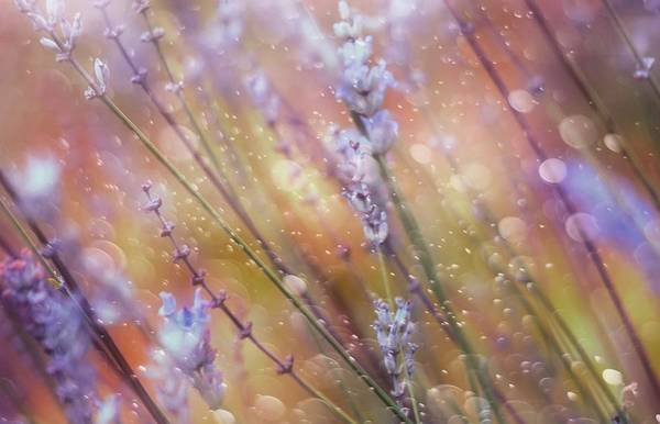 Purple Haze Photograph - Something Magical by Delphine Devos