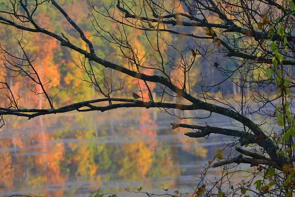 Morning Song Wall Art - Photograph - Songster On The Lake by Deborah Bifulco