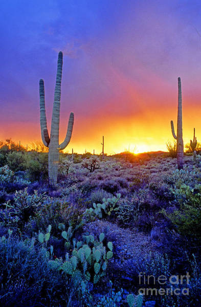 Photograph - Sonoran Desert At Dusk by Adam Sylvester