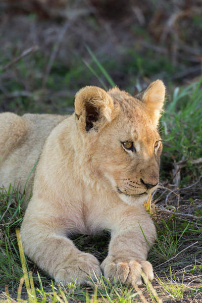 Big 5 Photograph - South Africa, Eastern Cape, East London by Cindy Miller Hopkins