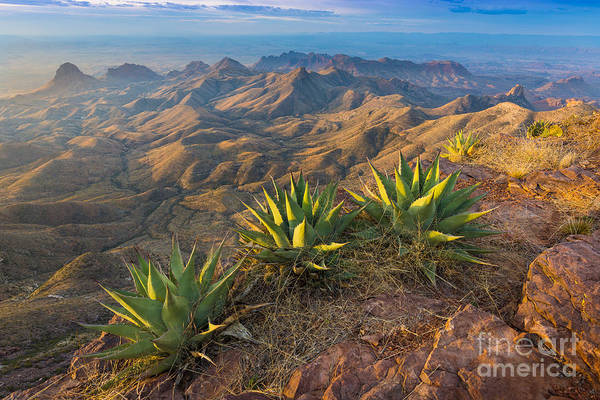 Nps Photograph - South Rim Morning by Inge Johnsson