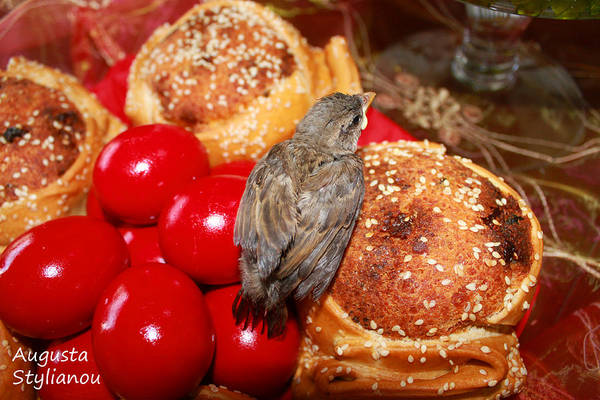 Photograph - Sparrow On Red Eggs by Augusta Stylianou