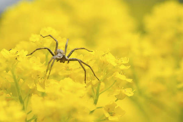Wall Art - Photograph - Spider by Jaroslaw Grudzinski