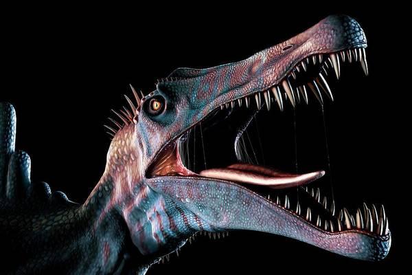 Carnivore Photograph - Spinosaurus Head Study by Mark Garlick